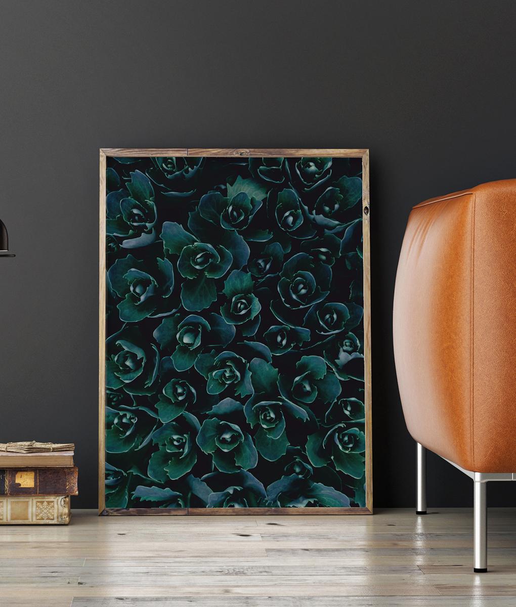 Plakat dekoracyjny sukulenty