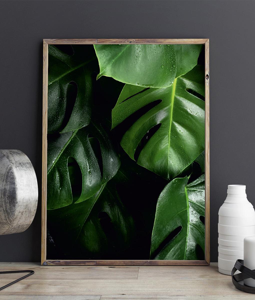 Plakat monstera zielone liście